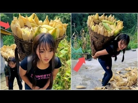 Beautiful girls harvesting corn on high mountain | Mr Lee petworldglobal.com