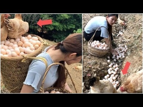 Beautiful woman works hard on her amazing chicken farm | Mr Lee petworldglobal.com