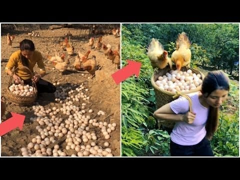 Beautiful woman works hard on her amazing chicken farm (part 2) | Mr Lee petworldglobal.com