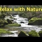 Calm Your Dog TV with Gentle Waterfalls ~ Relax with Nature petworldglobal.com