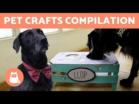 DIY CAT and DOG Toys and Accessories ?? HOMEMADE PET CRAFTS petworldglobal.com