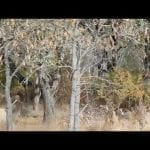 Eastern Grey Kangaroo family in the Australian Outback! petworldglobal.com
