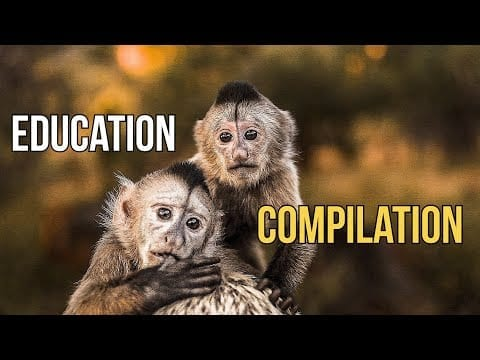 Education Compilation - Dean Schneider petworldglobal.com