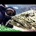 Fastest Fish in the World | Blue World | Free Documentary Nature petworldglobal.com