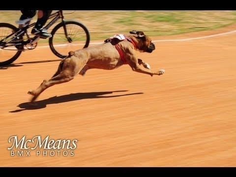 Funny Video: Dog vs Human BMX Race petworldglobal.com