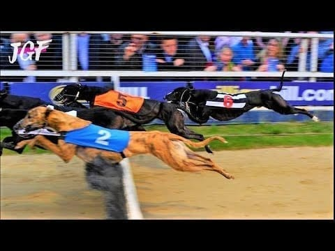 Greyhound racing - The two fast hurdles races petworldglobal.com