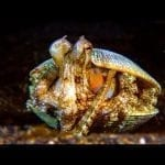 How Does This Octopus Build Its Motorhome? | Survival of the Weirdest | Love Nature petworldglobal.com