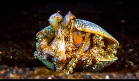 How Does This Octopus Build Its Motorhome?   Survival of the Weirdest   Love Nature petworldglobal.com