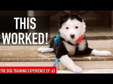 How I Trained My Dog to be LEFT ALONE in the House! petworldglobal.com