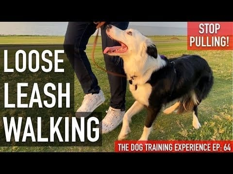 How I'm Training My Dog To Walk on Leash Without Pulling....UPDATE! petworldglobal.com