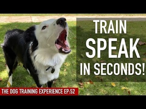 How To EASILY Train Your Dog To SPEAK in SECONDS! petworldglobal.com