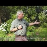 How to Maintain Pollinator Garden - Cincinnati Zoo petworldglobal.com