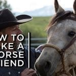 How to make a horse a friend. One cowboy's partnership with horses petworldglobal.com