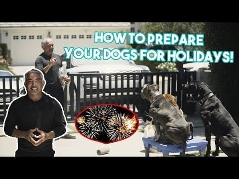 How To Prepare & Keep Your Pets Safe For July 4th Fireworks petworldglobal.com