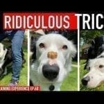 How to Train 3 RIDICULOUS Dog Tricks FAST! petworldglobal.com