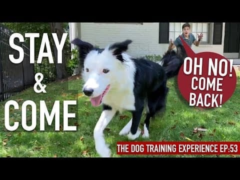 How To Train ANY Dog a RELIABLE Come And Stay ANYWHERE! petworldglobal.com