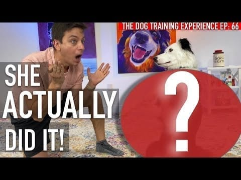 How To Train Your Dog THIS AMAZING Trick! petworldglobal.com