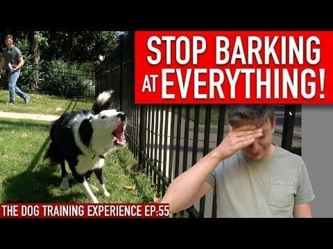 How to Train Your Dog to STOP BARKING at EVERYTHING That Moves!! petworldglobal.com