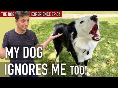 How To Train Your Dog to STOP Pretending You Don't Exist! petworldglobal.com