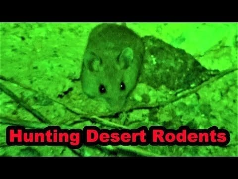 Hunting in the Desert with Villain petworldglobal.com