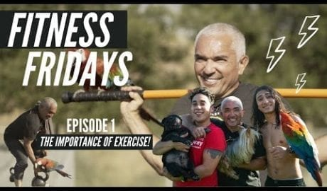 Importance of Exercise & Becoming A Better Pack Leader Of Our Lives petworldglobal.com