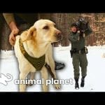 It's Training Day For These Canine Officers! | North Woods Law petworldglobal.com