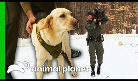 It's Training Day For These Canine Officers!   North Woods Law petworldglobal.com