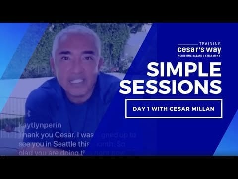 Learn The Importance Of Agreement & The Dog Walk With Cesar Millan petworldglobal.com