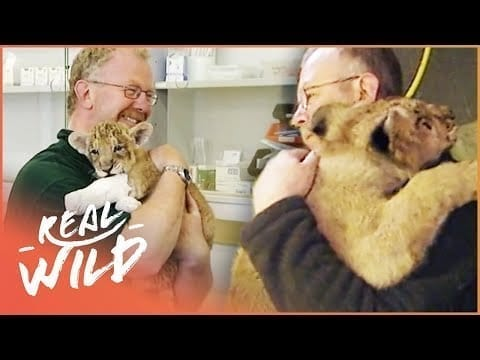 Lion Says Emotional Goodbye To Keeper Who Raised Him From A Cub | Zoo Days S1 EP20 | Real Wild petworldglobal.com