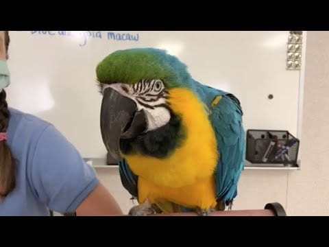 Live from Sac Zoo with Julio the blue & gold macaw petworldglobal.com
