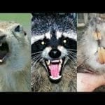 Muskrats and Squirrels and Raccoons Oh My!!! petworldglobal.com