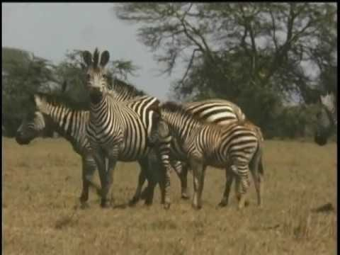 Natgeo Documentary - GORONGOSA 1963 - The Adventure.. petworldglobal.com