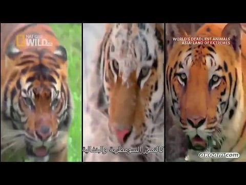 Natgeo Documentary - World's Deadliest Animals Asia - Land Of Extremes - Nat Geo Wild HD .. petworldglobal.com