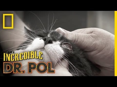 One Sly Cat | The Incredible Dr. Pol petworldglobal.com