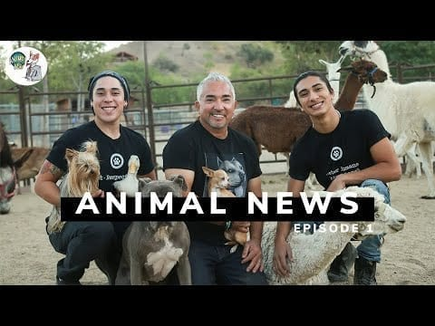 Our new Youtube Series, ANIMAL NEWS! petworldglobal.com