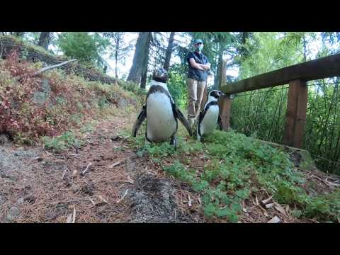 Penguins Nacho And Goat Go For Woodland Waddle petworldglobal.com
