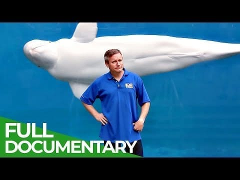 Playing With Belugas Whales! | Blue World | Free Documentary Nature petworldglobal.com