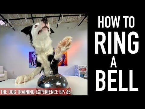 Potty Training: How to Train Your Dog to Ring a Bell to Be Let Outside! petworldglobal.com