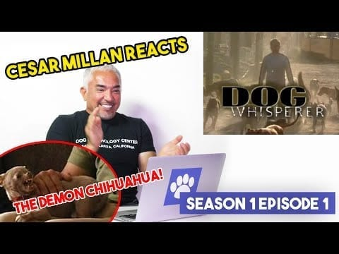 Reacting to my first ever TV show episode! petworldglobal.com
