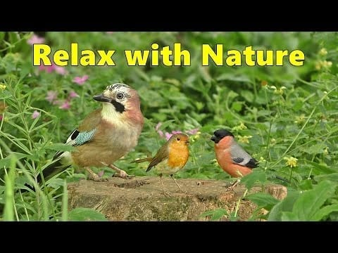 Relaxing Videos for Cats to Watch and Sleep ~ Birds and Bird Sounds Spectacular 8 HOURS ⭐ petworldglobal.com