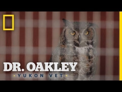 Snappy the Owl | Dr. Oakley, Yukon Vet petworldglobal.com