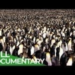 South Georgia - Penguin Paradise of the South Atlantic | Free Documentary Nature petworldglobal.com