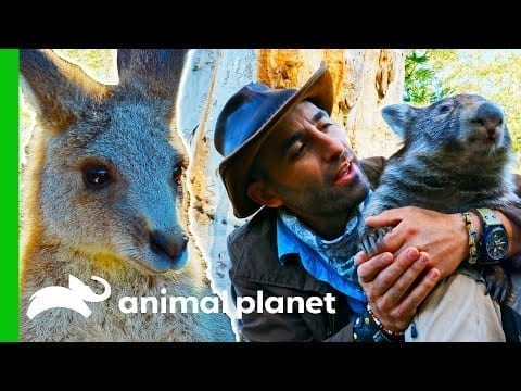 Studying Some Of Australia's Marsupials   Coyote Peterson: Brave The Wild petworldglobal.com