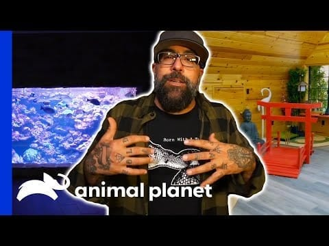 Take A Look At Some Of The Craziest Animal Cribs! | Animal Cribs petworldglobal.com