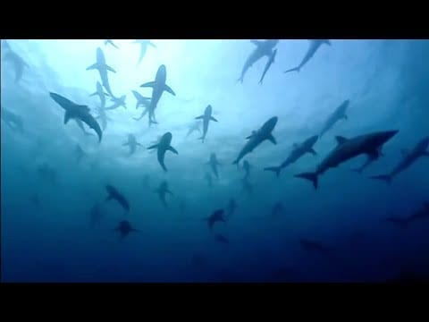 The Blue Planet Collection | Part 1 | BBC Earth petworldglobal.com