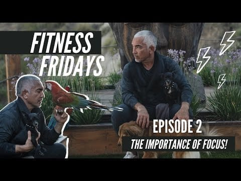 The Importance of Focus on Cesar Millan's Fitness Fridays petworldglobal.com