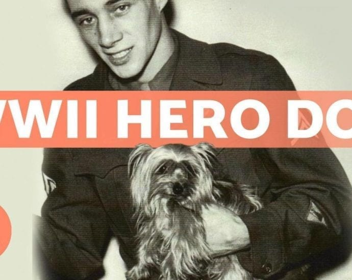 The PUPPY That Became a HERO petworldglobal.com