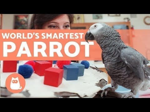 The SMARTEST PARROT in the WORLD ?? (Alex the African Gray) petworldglobal.com