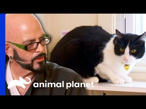 This Cat Owner Tests Jackson's Patience! | My Cat From Hell petworldglobal.com