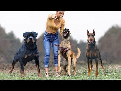 Top 10 Most Confident Dog Breeds petworldglobal.com